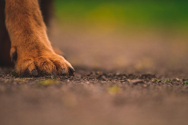 Perchè il cane si lecca le zampe?
