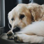 cane raffreddato