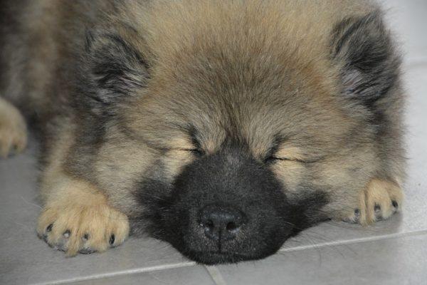 far dormire il cane