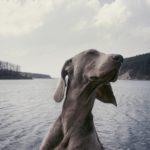 paura dell'acqua nel cane