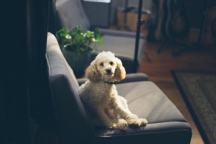 L'otite del cane, come curarla ed affrontarla
