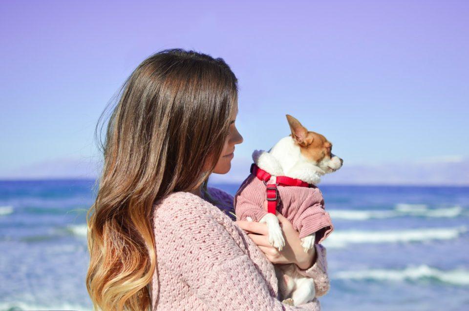 Spiagge per cani in Campania