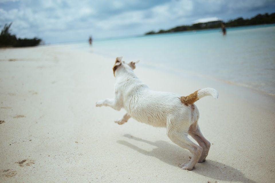 Spiagge per cani in Emilia e nelle Marche