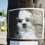 annunci cani smarriti