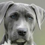 i cani vedono i colori