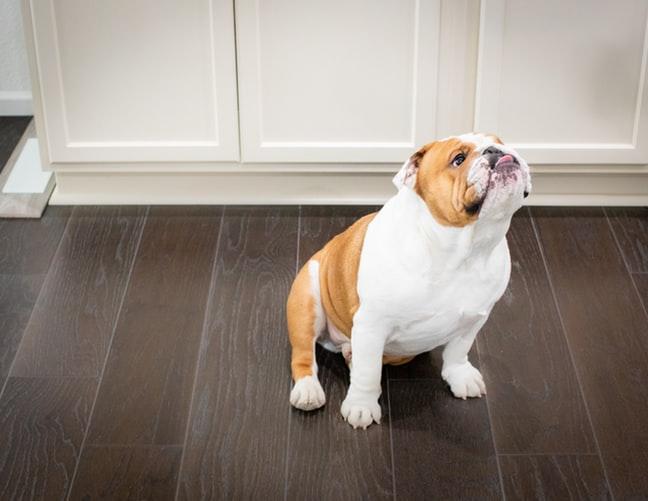 prognatismo nel cane