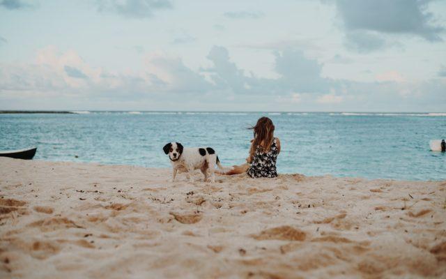 spiagge per cani in Sardegna