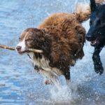 spiaggia per cani Veneto e Toscana