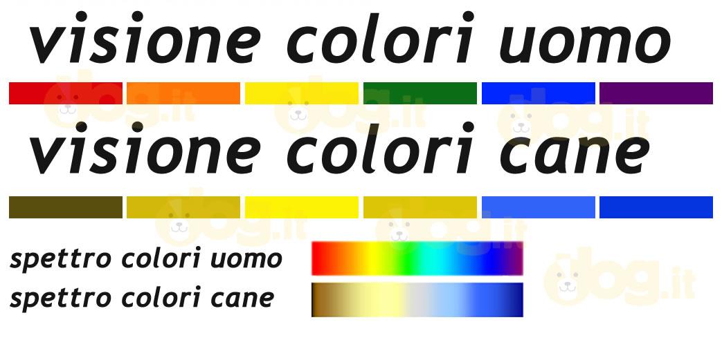 Quali sono i colori che vedono i cani