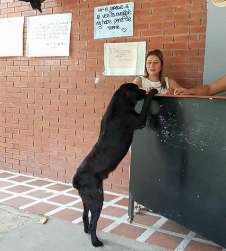 Il cane che ogni giorno al bar paga il biscontto con una foglia