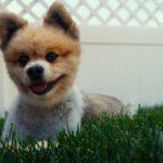 i cani ridono