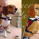 Storia del cane Belle che salva la vita al suo padrone