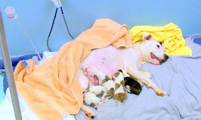 Storie di cani: buttata giù dall'auto mentre partorisce