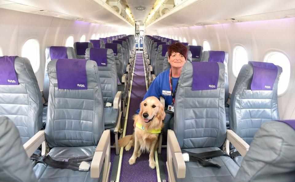 Cane, viaggio in aereo