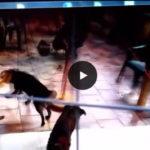 canile lager di Lecce