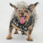 il cane più brutto del mondo