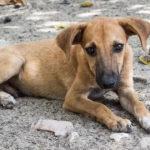 legge sull'abbandono degli animali