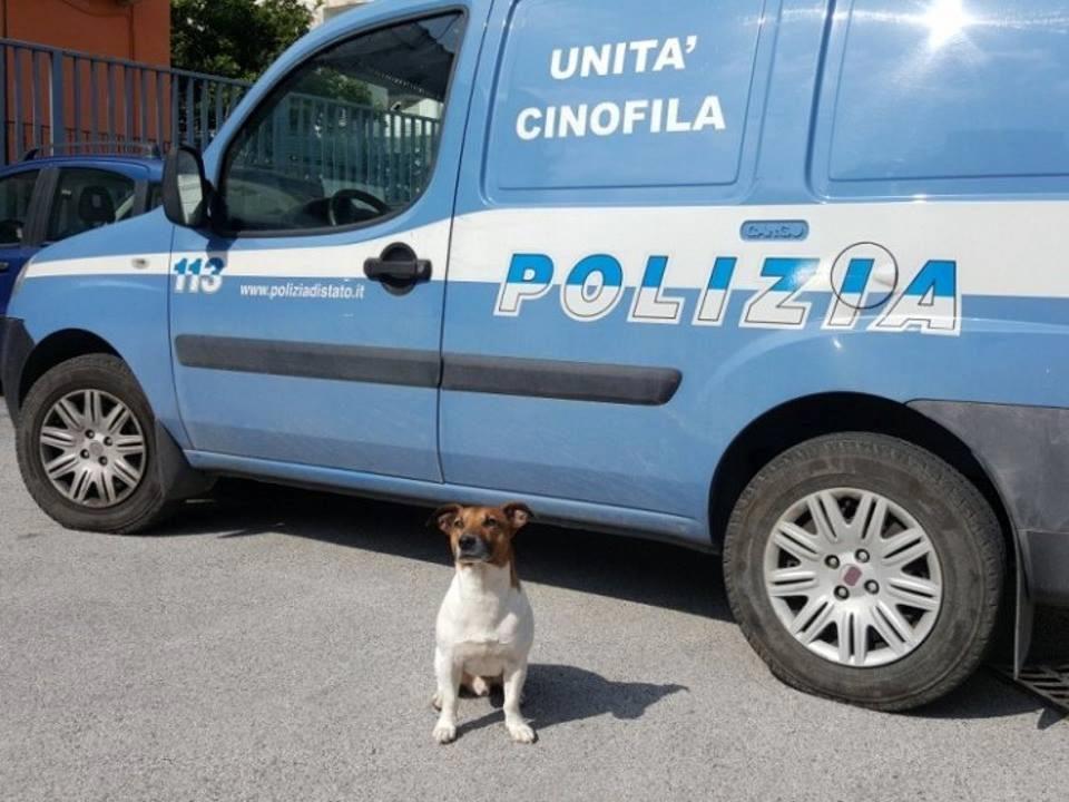 Cane poliziotto in pericolo di vita