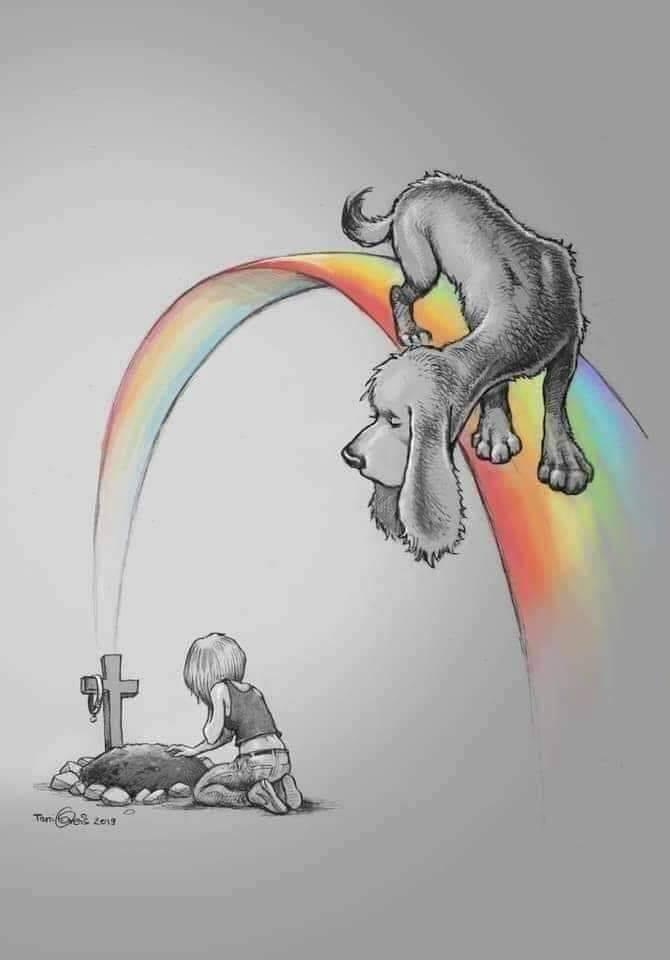 quando un cane muore