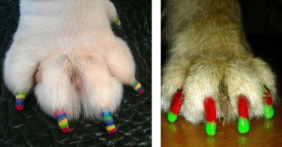 zampicure con smalto per cani