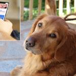 Baratta il suo cane per un iphone