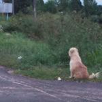 Cane attende ad incrocio ritorno dei padroncini
