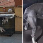 Cane chiuso in gabbia su un balcone