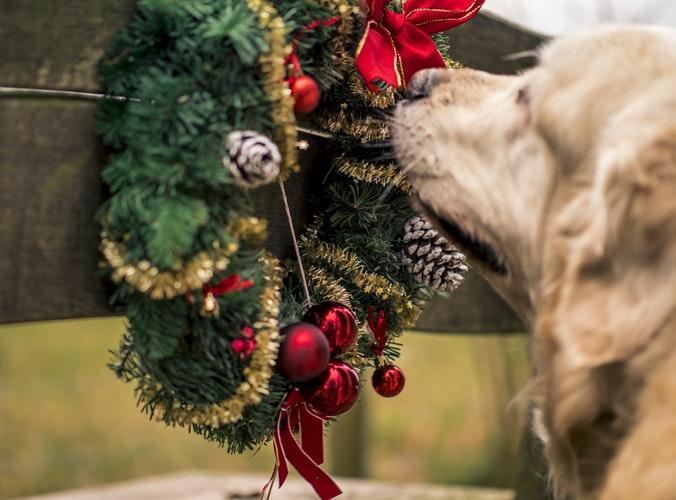 cane e albero di natale