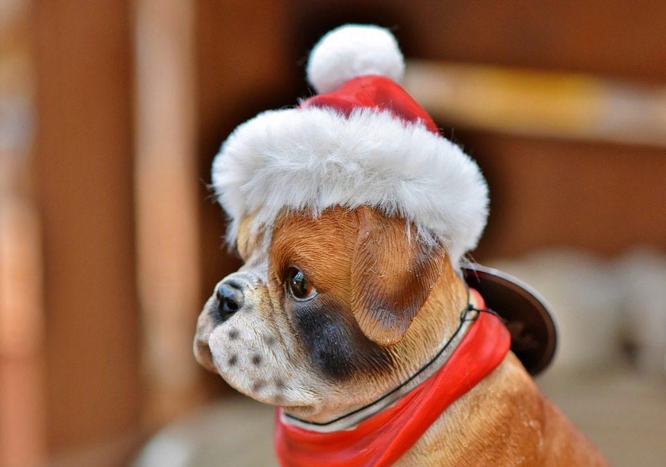 Cane in affitto a Natale, l'ultima folle moda