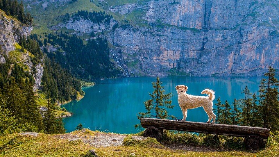 Viaggiare con il cane in montagna