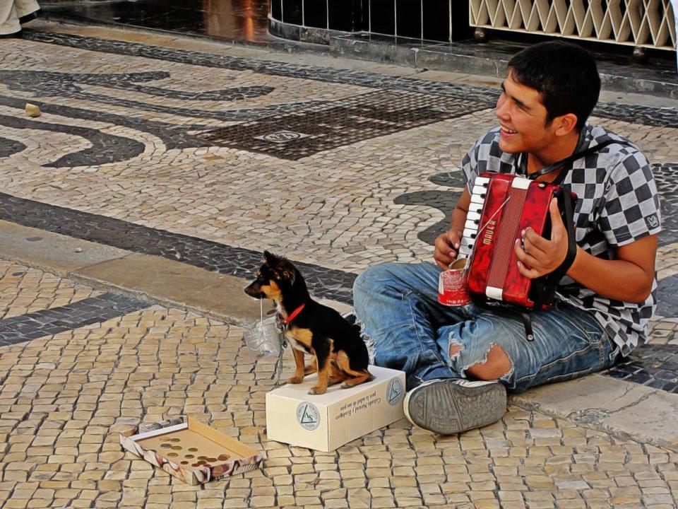 Cane rapito da mendicante per impietosire i passanti