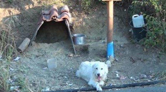 La storia del cane che aspetta il suo padrone sul punto dell'incidente