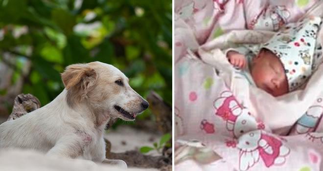 Cane salva neonata abbandonata nel bosco