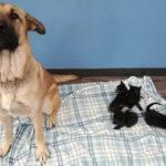 Cane salva la vita 5 cinque gattini
