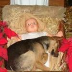 cane si ripara nel presepe accanto Gesù Bambino