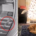 Cane entra in casa durante una tempesta