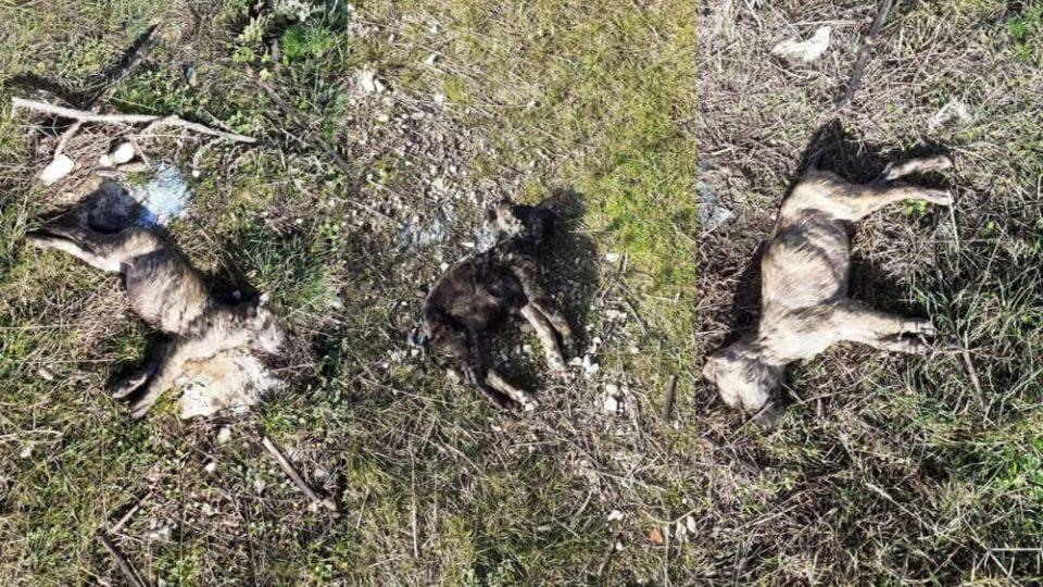 Cani avvelenati a San Giovanni Rotondo