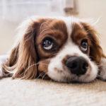 11 cose che i cani possono prevenire prima che accadano