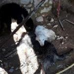 Cani salvati a Verona