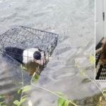 Chiusa in gabbia e buttata nel lago