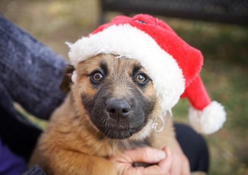 cuccioli regalo di natale