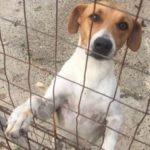 fragolina, il cane che si è lasciato morire di depressione dopo 4 abbandoni