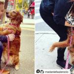 La storia del cane che abbraccia tutti