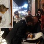 Gattino ammazzato a bastonate a Lucera