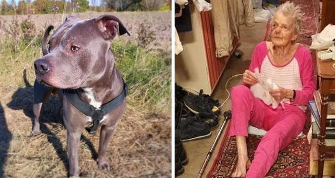 Pit Bull salva la vita ad anziana signora