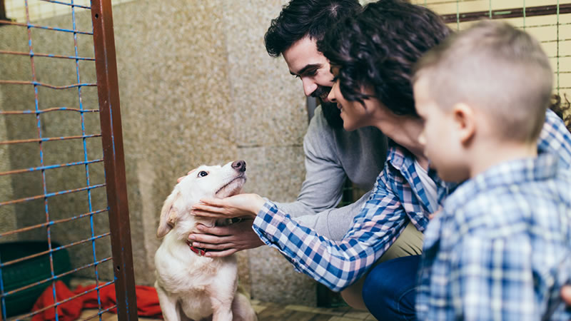 ragazzo disabile organizza festa di beneficienza per cani randagi