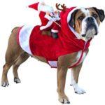 vestiti natalizi pr cani