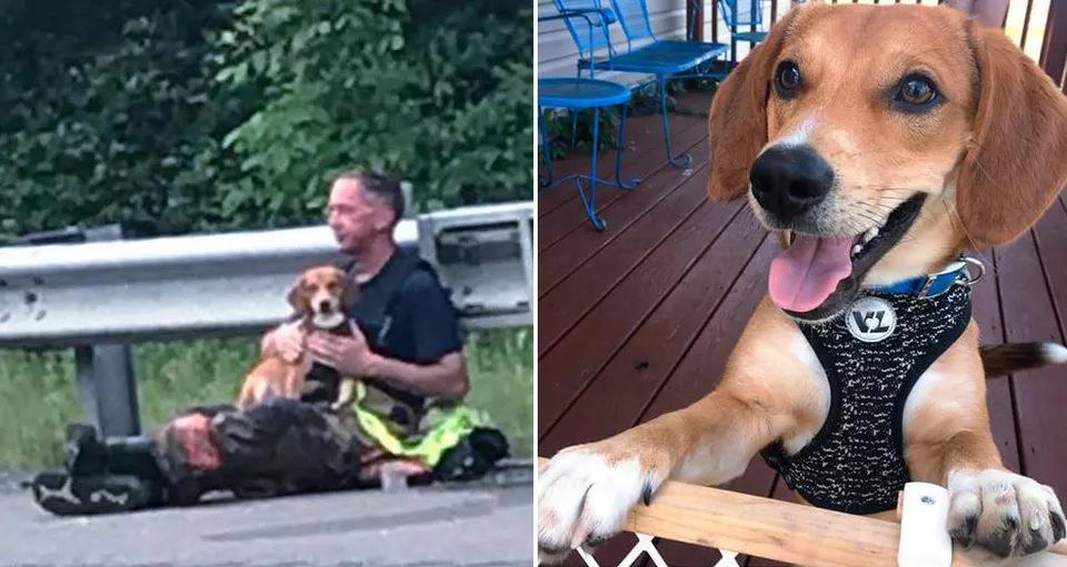 Vigile del Fuoco abbraccia e consola un cane dopo incidente