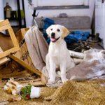 Cani da soli in casa