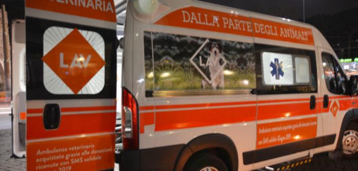 ambulanza LAV Italia